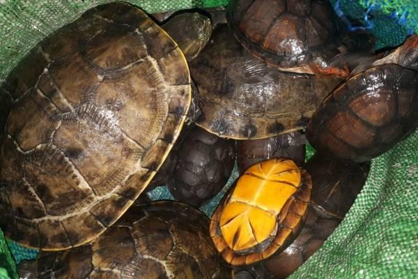 animales en peligro de extinción rescatados en Quetzaltenango