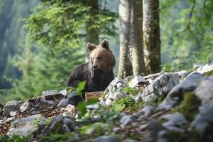 Osos, Eslovenia