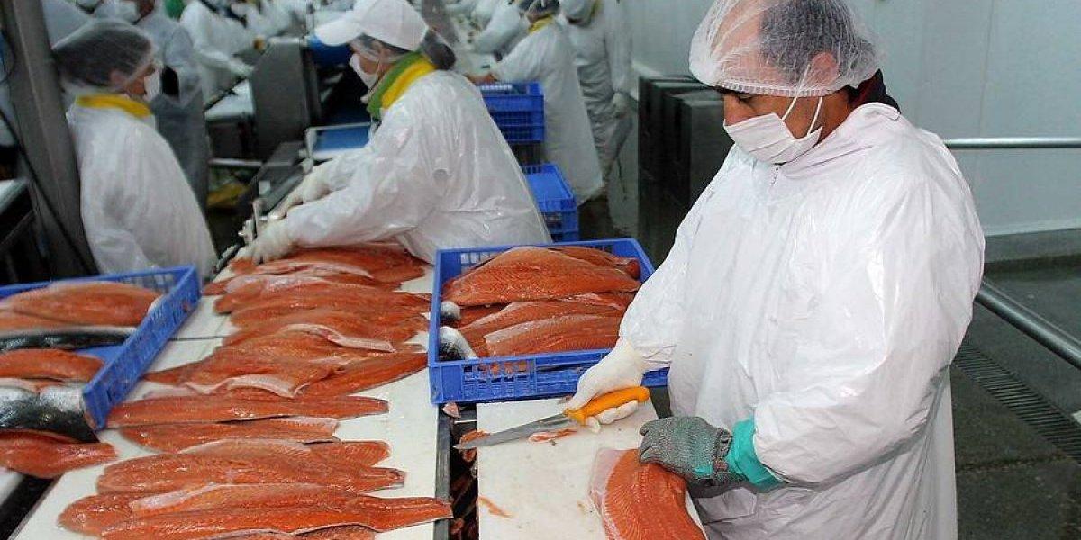 FNE aprueba compra de Salmones Friosur por parte de Exportadora Los Fiordos de Agrosuper