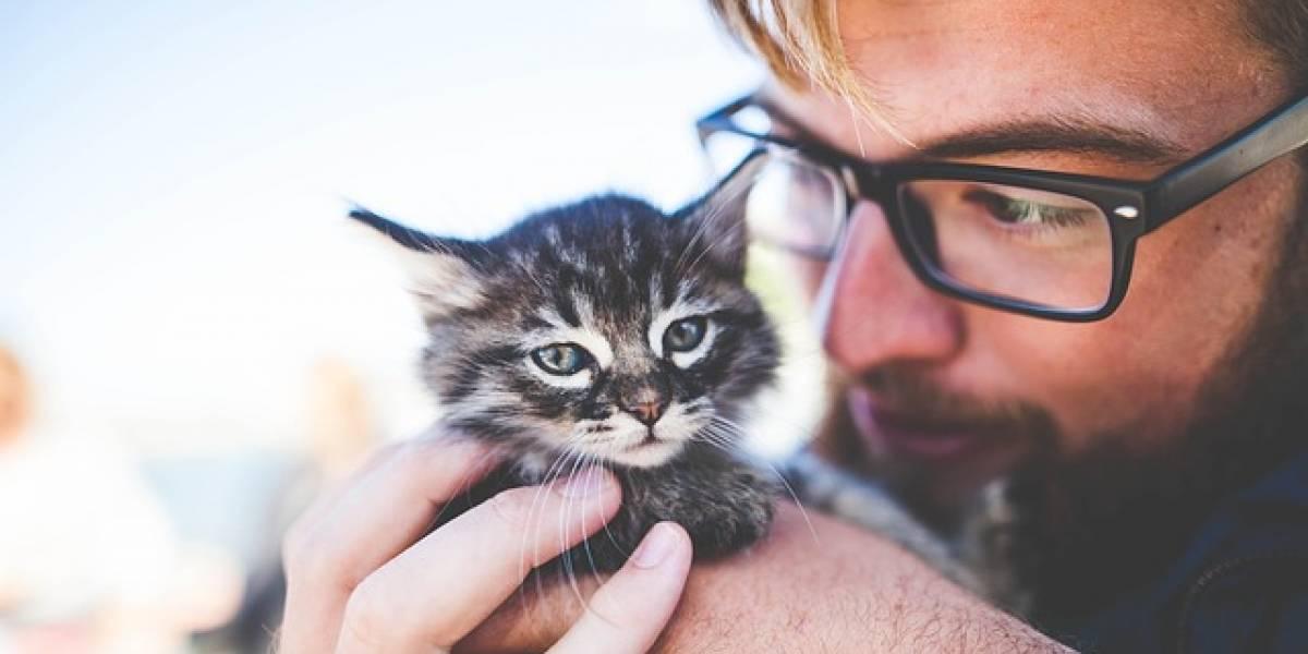Día del Gato: Científicos dicenque ver videos de gatitos es bueno para la salud