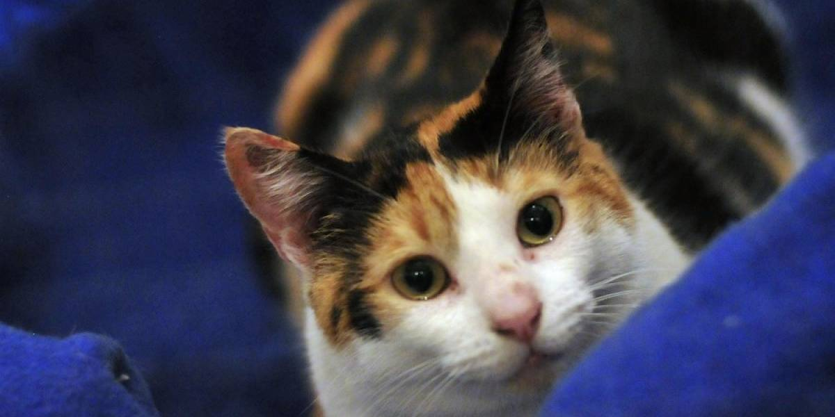 "Carozzi reclama que no está comprobado que ""8 de cada 10 gatos prefieran Whiskas"""