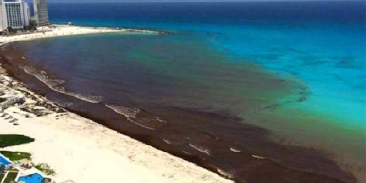 ¿Qué es el sargazo y por qué está a nada de causar un desastre ecológico en playas de México?