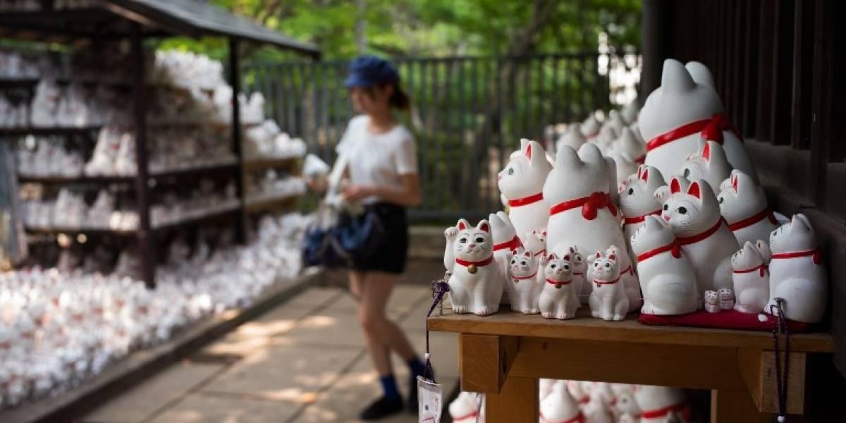 """VIDEO. El templo de los """"gatos de la suerte"""" que atrae a instagramers de todo el mundo"""