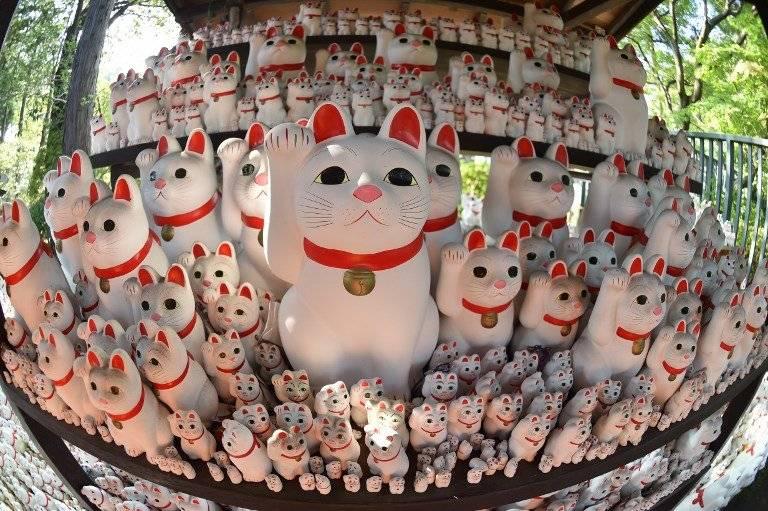 Templo de gatos de la suerte en Japón