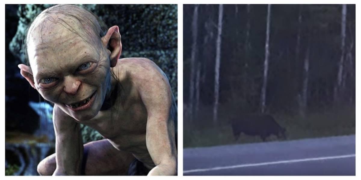 """VIDEO.Captan extraña criaturaen un bosquey usuarios la comparan con""""Gollum"""""""