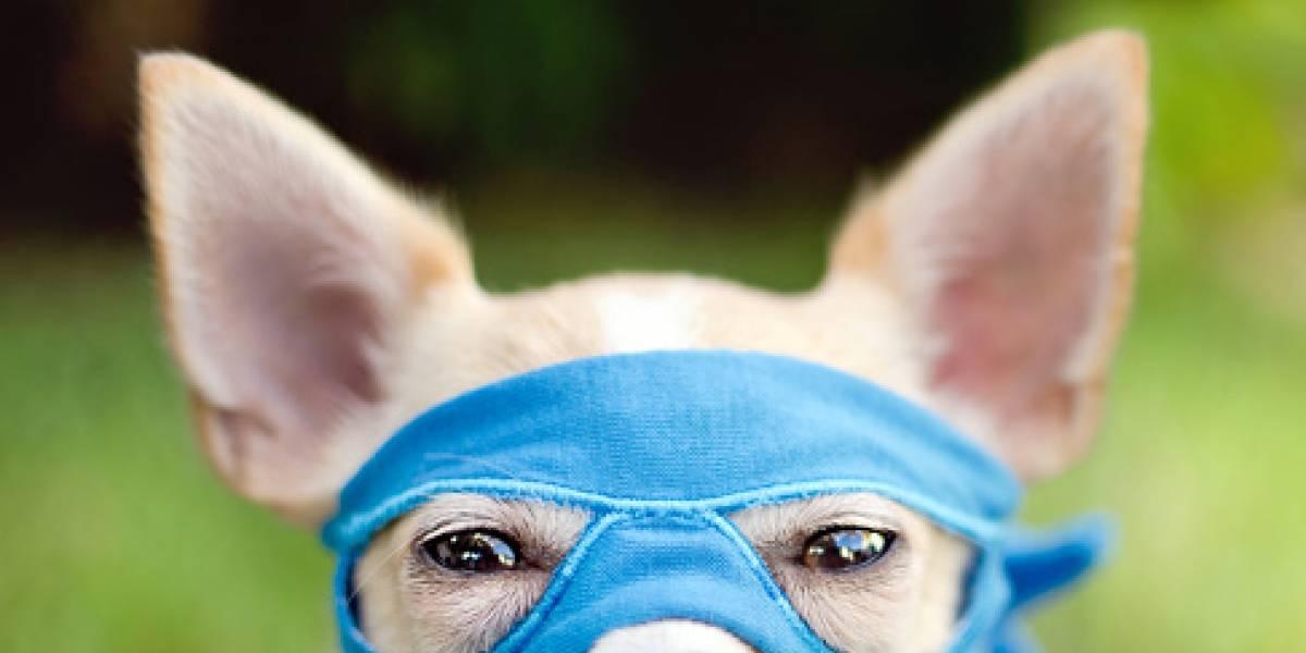 """Entró a robar con su perro a una casa, se le olvidó llevárselo y pagó las consecuencias: así fue la venganza de """"Roco"""""""