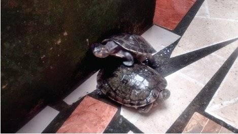 Ecuatoriano sentenciado a un año y medio de prisión por poseer ilegalmente animales silvestres Ministerio de Ambiente