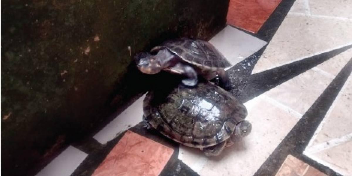 Ecuatoriano sentenciado a un año y medio de prisión por poseer ilegalmente animales silvestres