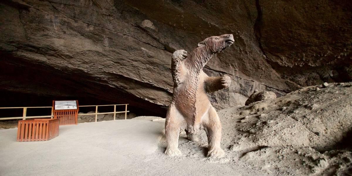 No solo quieren repatriar al Moai: Ahora quieren traer restos originales del Milodón a Chile del British Museum