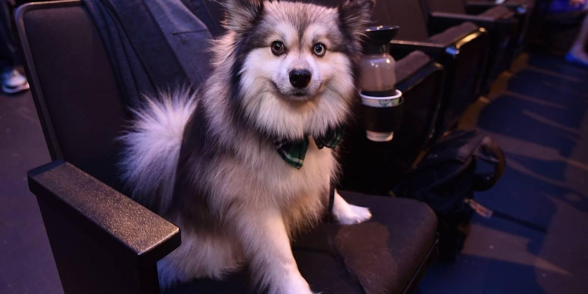 Esta página te avisa si un perro muere en medio de una serie o película