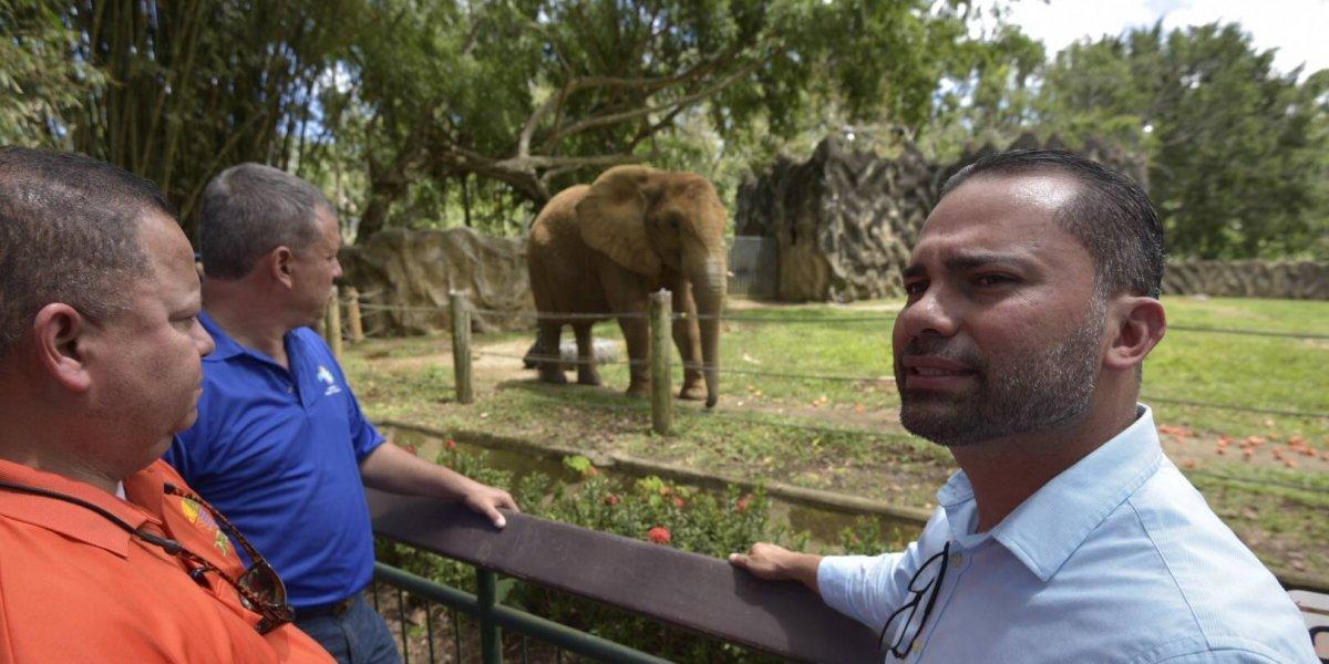 Insisten en apurar apertura de zoológico y en la permanencia de Mundi
