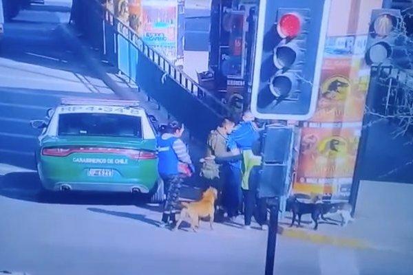 Carabineros mata a perrito en Quilicura