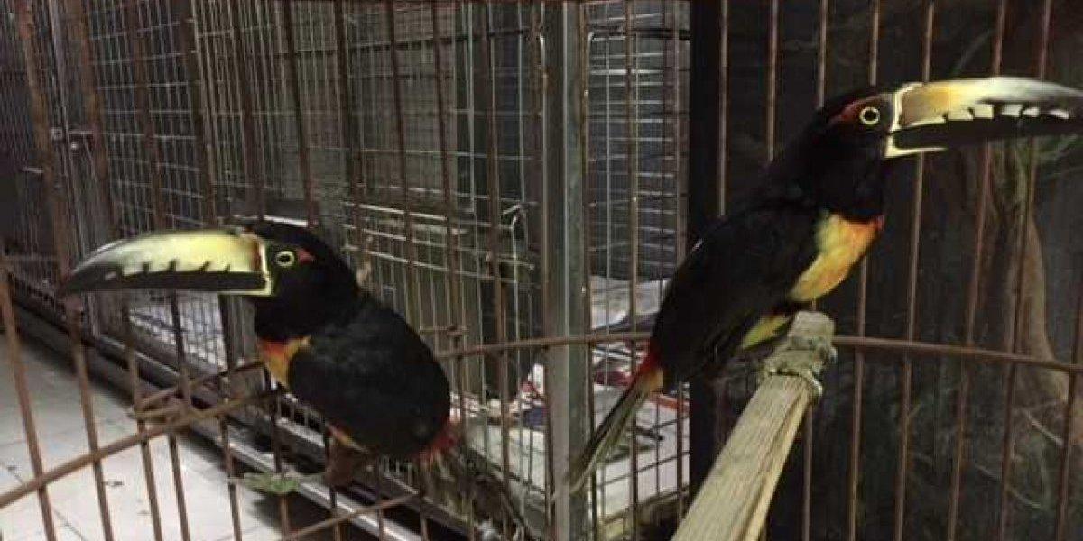 Profepa inspecciona domicilio en Azcapotzalco y asegura aves