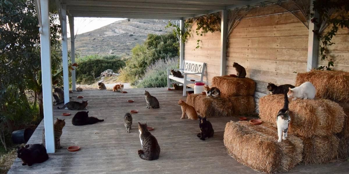 Dónde envío mi CV: ofrecen trabajo para cuidar a 55 gatitos en una isla paradisíaca y además con sueldo fijo