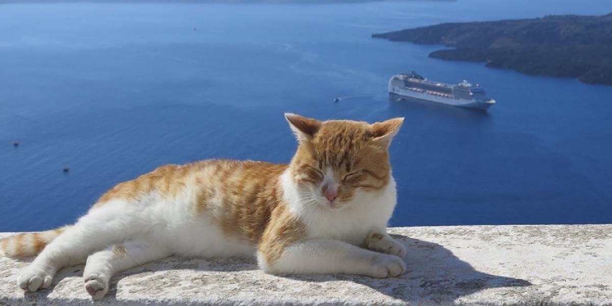 Si te gustan los animales, el trabajo soñado espera por ti en Grecia