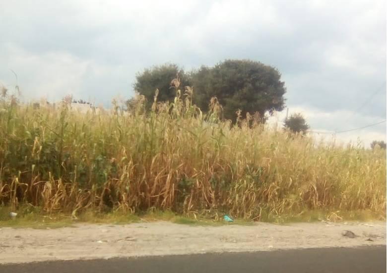 Los campos de alrededor han visto perdidas por la falta de lluvia