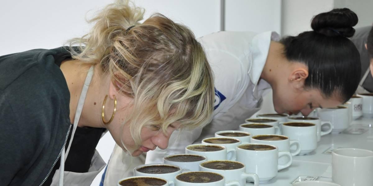 Yotoco y Florida, los municipios en los que se cultiva el mejor café del Valle del Cauca