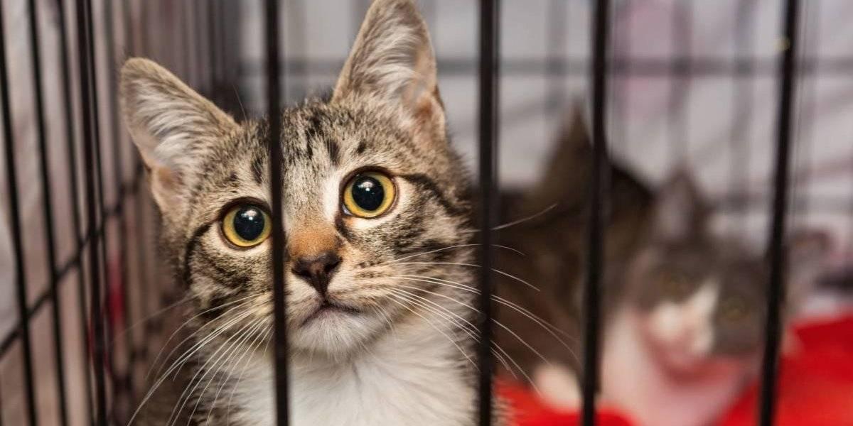 Refugio de animales habría obligado a sus trabajadores a congelar a gatitos hasta la muerte
