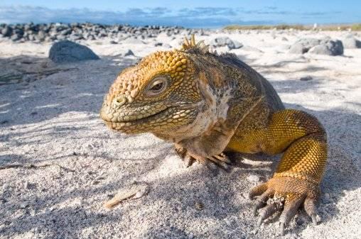 Gaalápagos