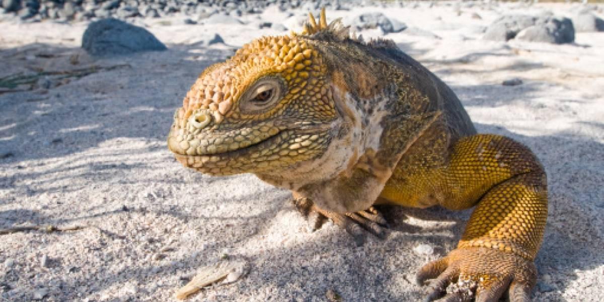 Turistas extranjeros deberán tener seguro de salud privado para ingresar a Galápagos