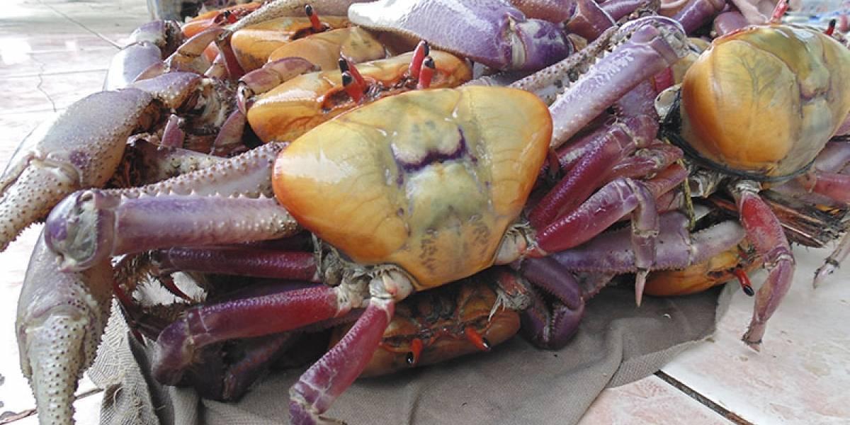 Los cangrejos regresan a las mesas después de un mes de veda