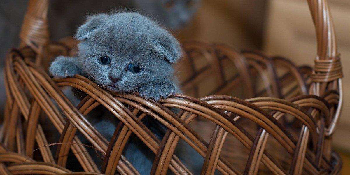 Investigan albergue que congelaba gatitos para matarlos en Estados Unidos