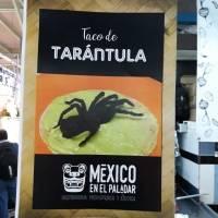 Tacos de tarántula