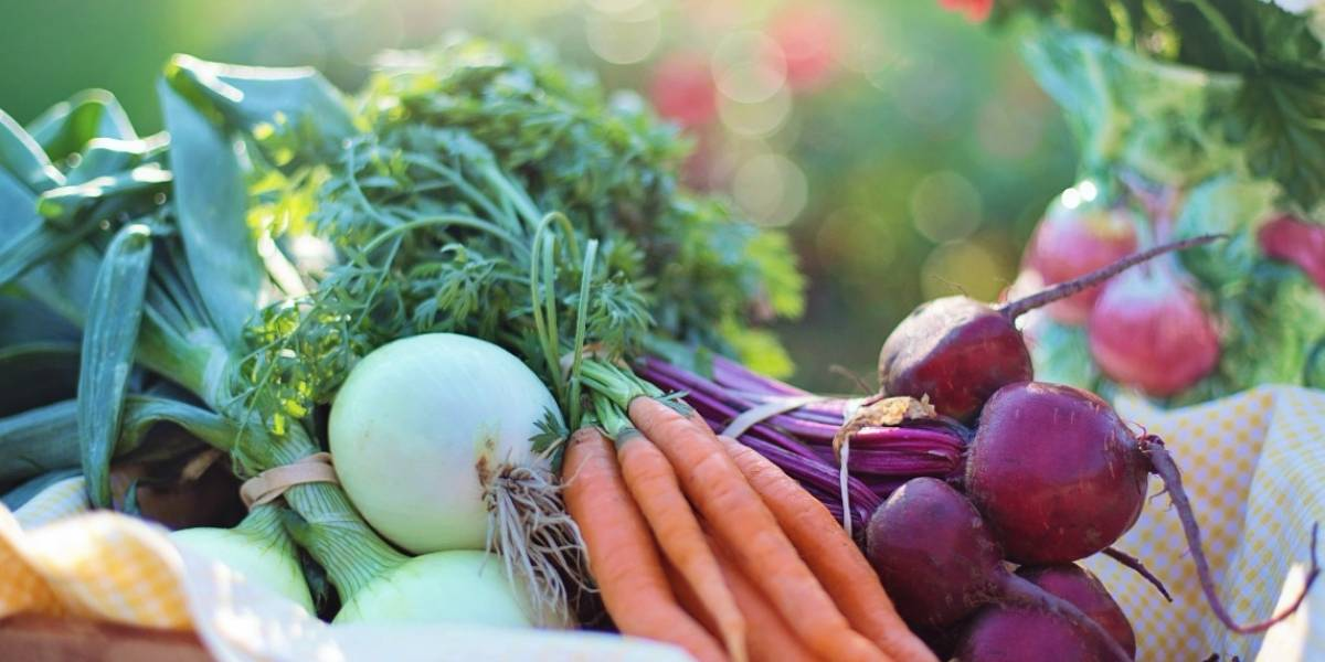 Desequilibrio nutricional es peligroso para la salud: dietas bajas en calorías son la clave