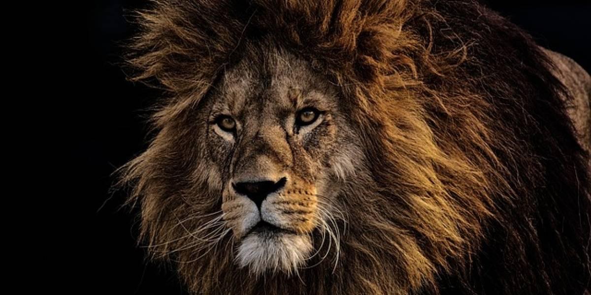 Mujer intenta vender un león disecado por Internet