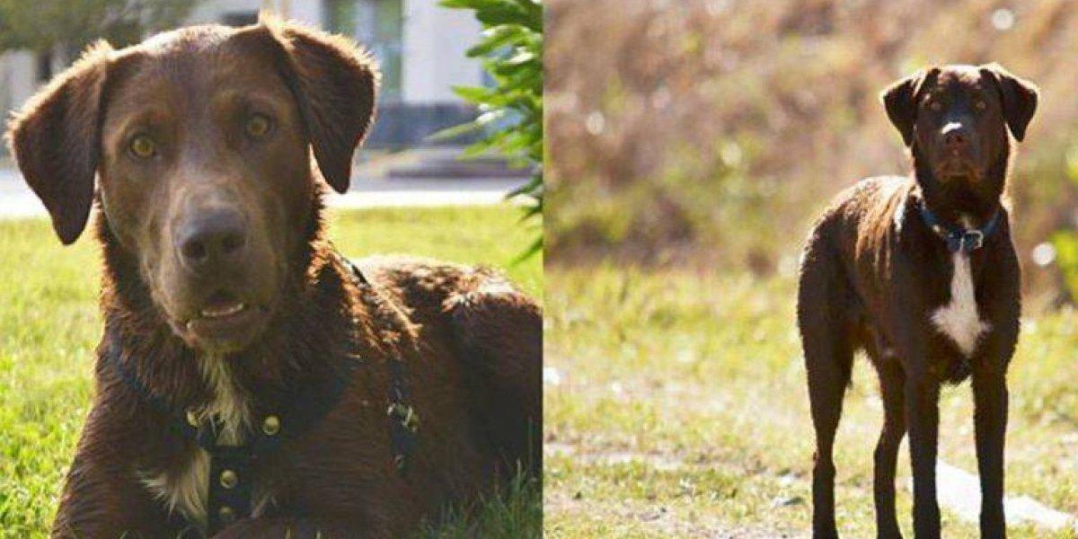 """""""Lo extraño mucho, era mi compañero"""": joven lleva días silbando para encontrar a su perro desaparecido"""