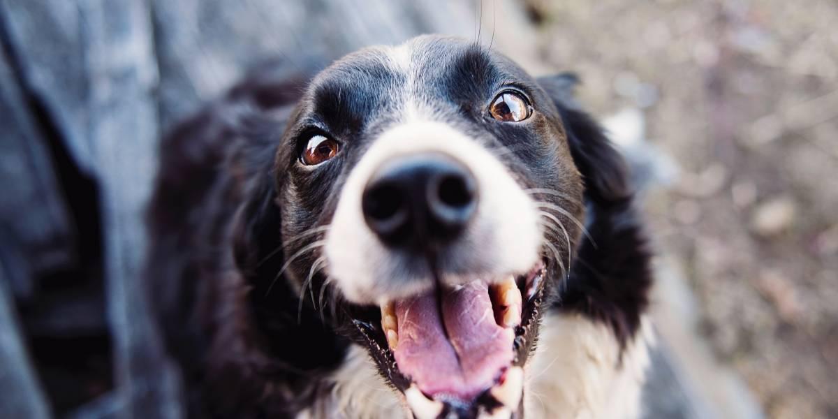 Pet terapia: passar tempo com animais ajuda a tratar doenças