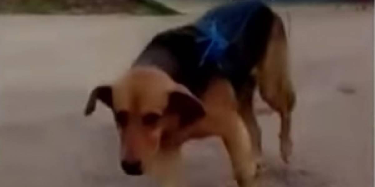 Video: amarran perro a una moto y lo arrastran varios kilómetros