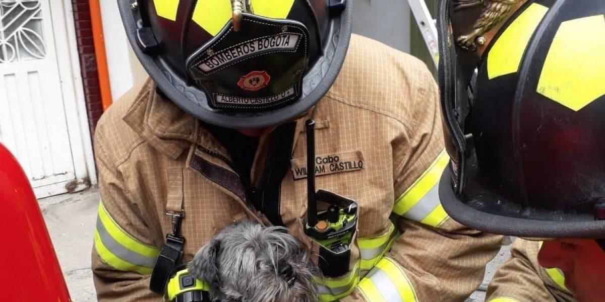 Video: así salvaron de morir en un incendio a un perrito y dos canarios en Bogotá