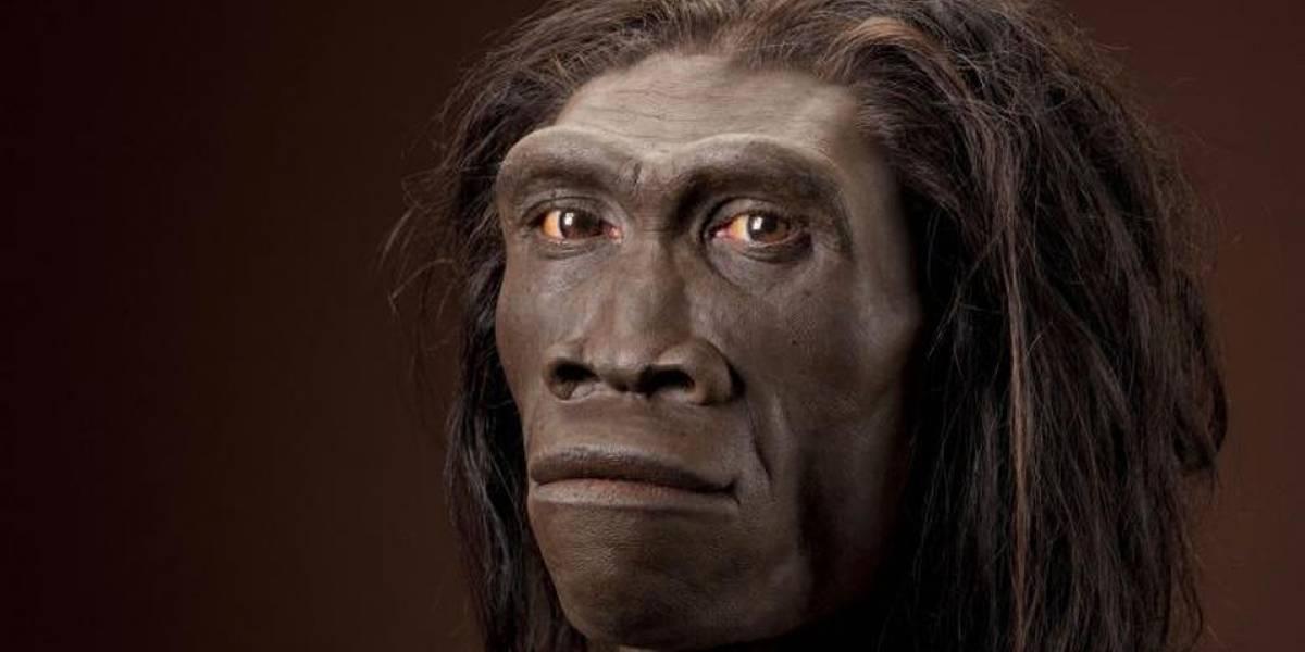 ¿Debemos preocuparnos? El homo erectus se habría extinguido por ser demasiado perezoso