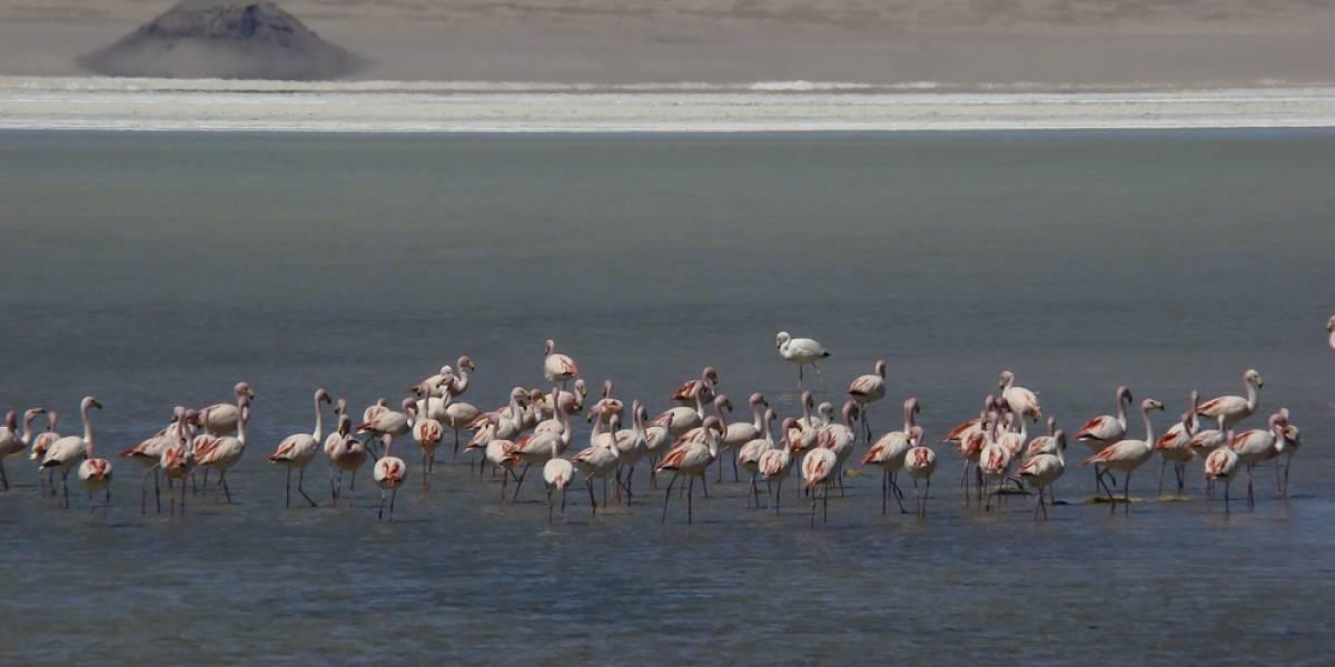 """¡Nuevo Parque Nacional! Consejo de Ministros para la sustentabilidad aprobó la propuesta del """"Parque Salar del Huasco"""""""