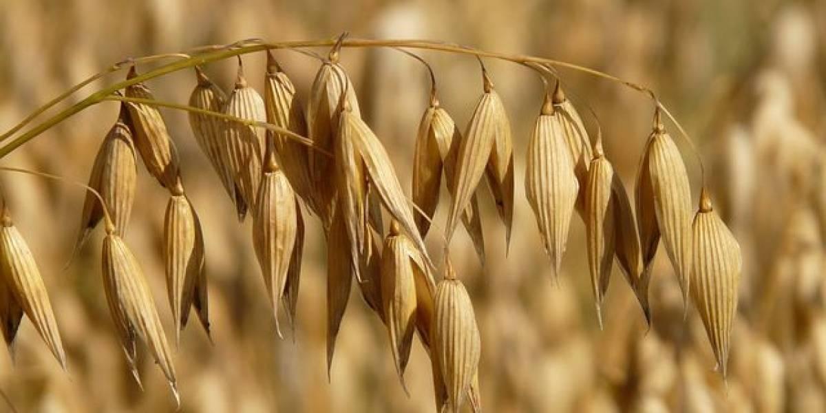 Tus cereales y avena ahora vienen fortificados con herbicidas cancerígenos