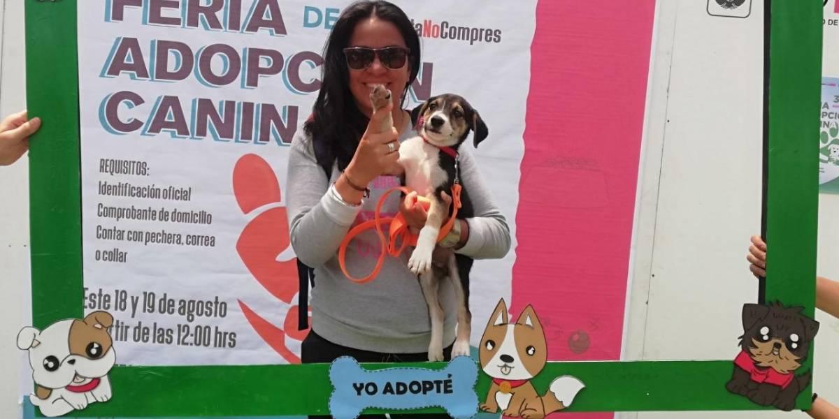 Perros rescatados del Metro buscan casa