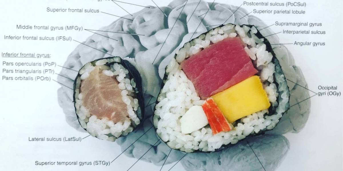 A cientista que usa sushi para explicar o funcionamento do cérebro