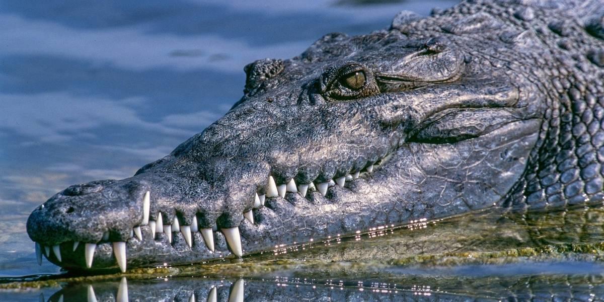 Vídeo mostra crocodilo em região de enchente após passagem do furacão Sally