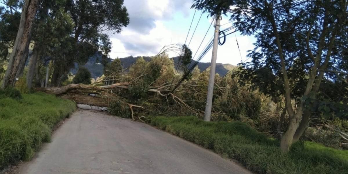 Árbol causa estragos en Guaymaral luego del sismo que se sintió en Bogotá