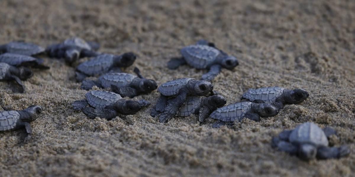 VIDEO. Desarticulan una red de contrabando de tortugas en España