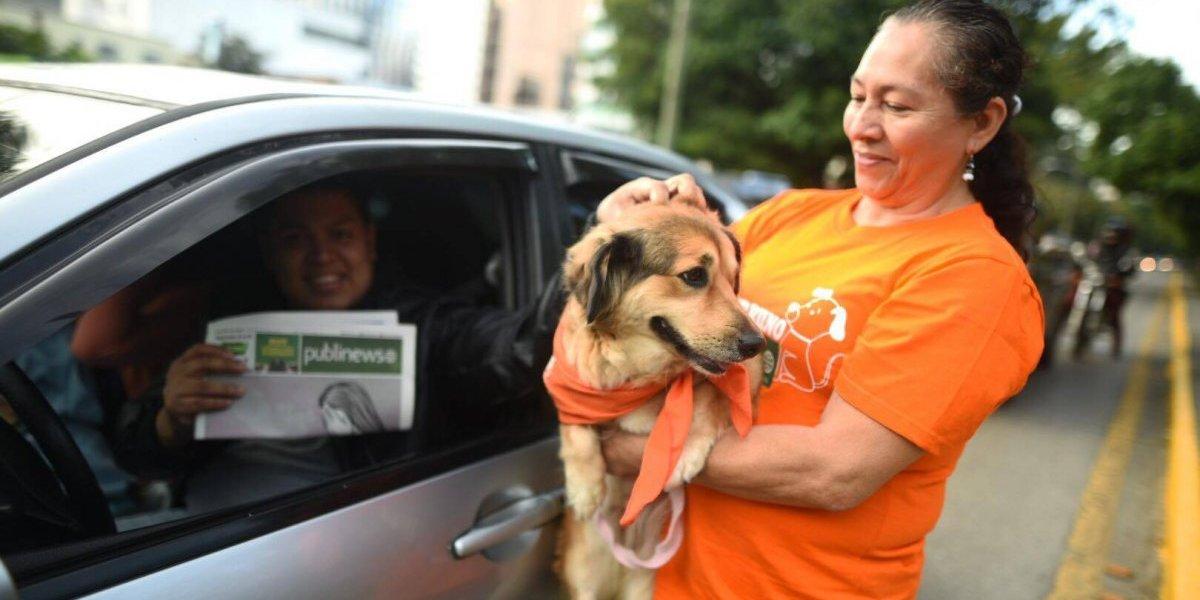 El #DíaPerrunoPublinews invita a que nos eduquemos acerca del trato adecuado hacia los animales