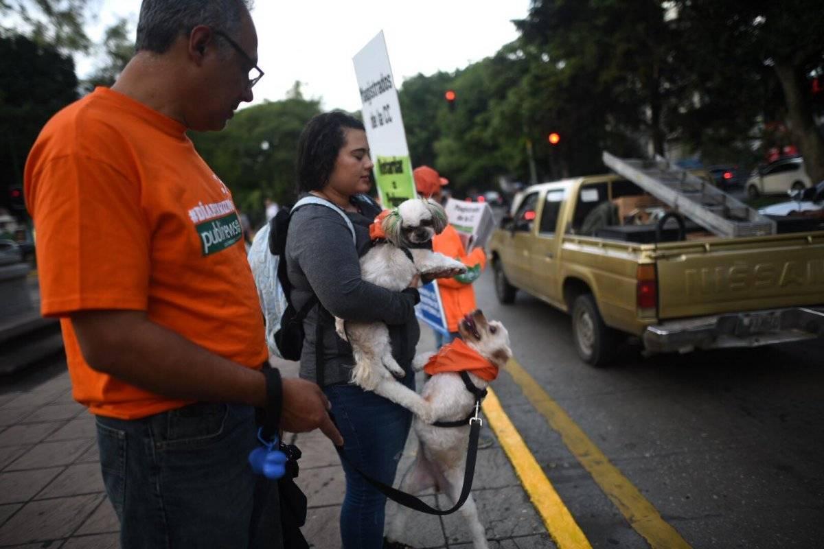 Se celebró el #DíaPerrunoPublinews 2018 en varios puntos de las zonas 1, 7, 9, 10 y 14. Foto: Edwin Bercián
