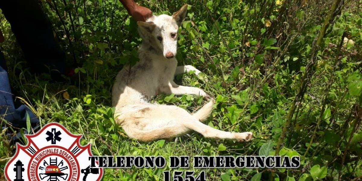 Bomberos rescatan a una perrita que llevaba 10 días perdida