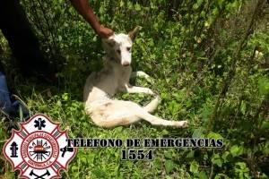 Paloma fue encontrada en el fondo de un pozo