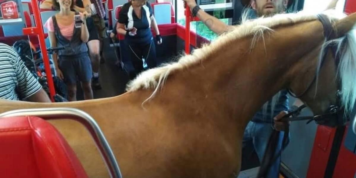 Curiosos pasajeros de un tren austríaco sorprenden y divierten a los viajeros