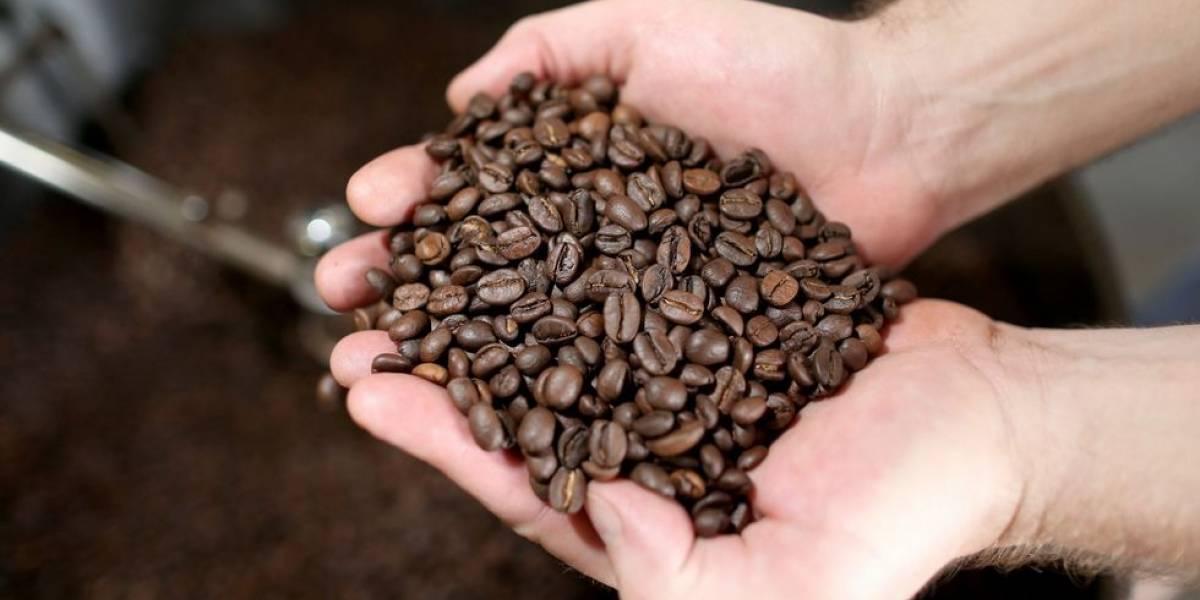 Finanzas Públicas apoya ley de reactivación del café