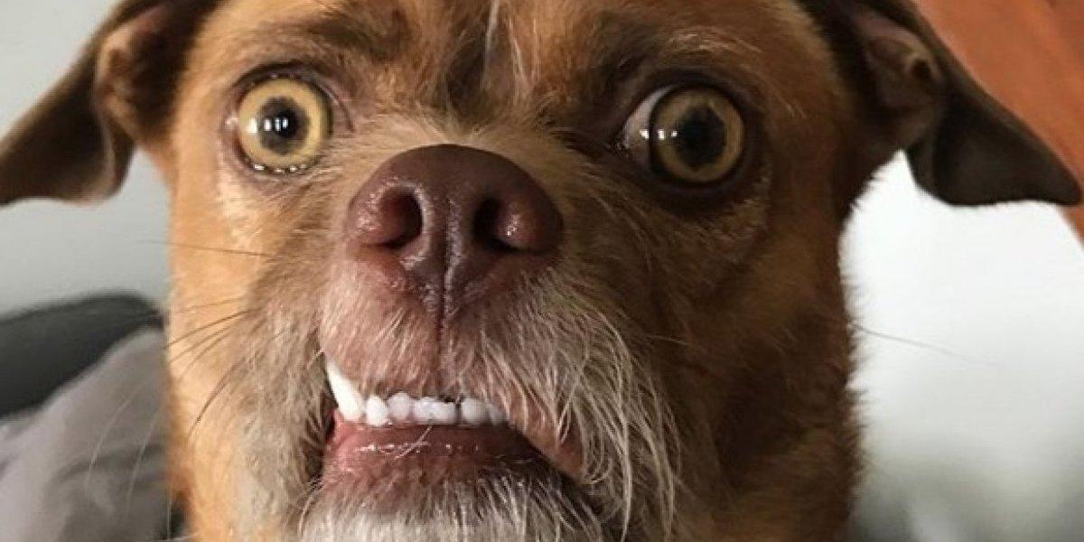 """El """"perro extremadamente preocupado"""": el mejor meme del 2018 que además es una celebridad en Instagram"""