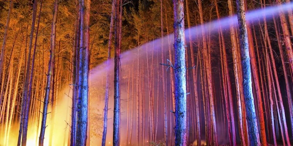 Un siniestro del tamaño de 500 estadios de fútbol: Incendio forestal arrasa en Alemania agravado por detonaciones de bombas de la II Guerra Mundial