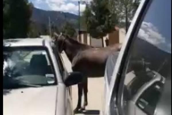 VIDEO: Dueño llevaba a su caballo atado a su auto y conductor trató de impedirlo